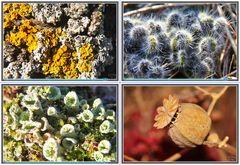 Miniaturas de la Naturaleza (Macros) III