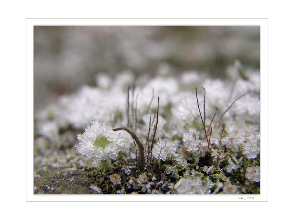 Miniatur~Eiswelten II