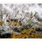 Miniatur~Eiswelten VIII