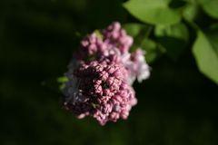 Miniblütenhaufen ;)