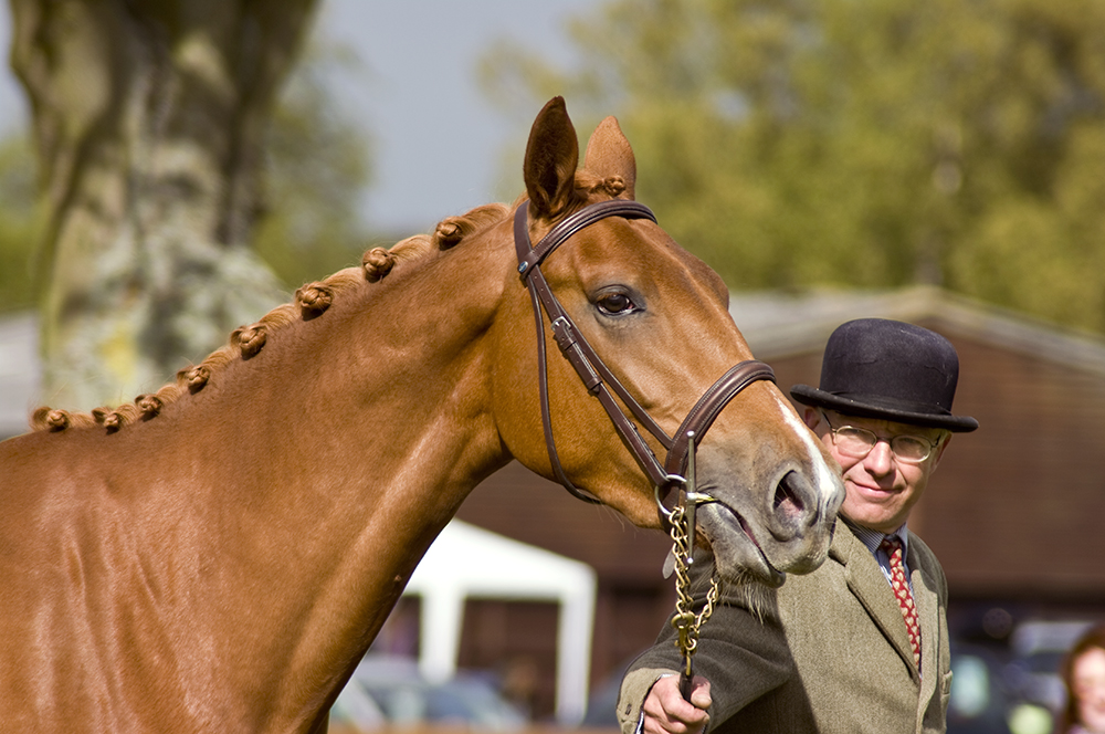 Minie @ Woodbridge Horse Show, Suffolk, UK
