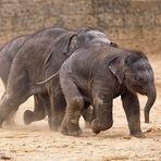 Minifantenrennen