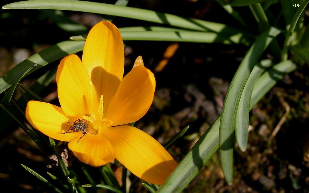 Minisonne im Garten
