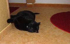 Minka an ihrer Lieblingswand