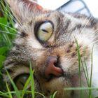 Minka liegt im Gras