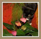 Minka mag die Flamingoblume, ich auch,