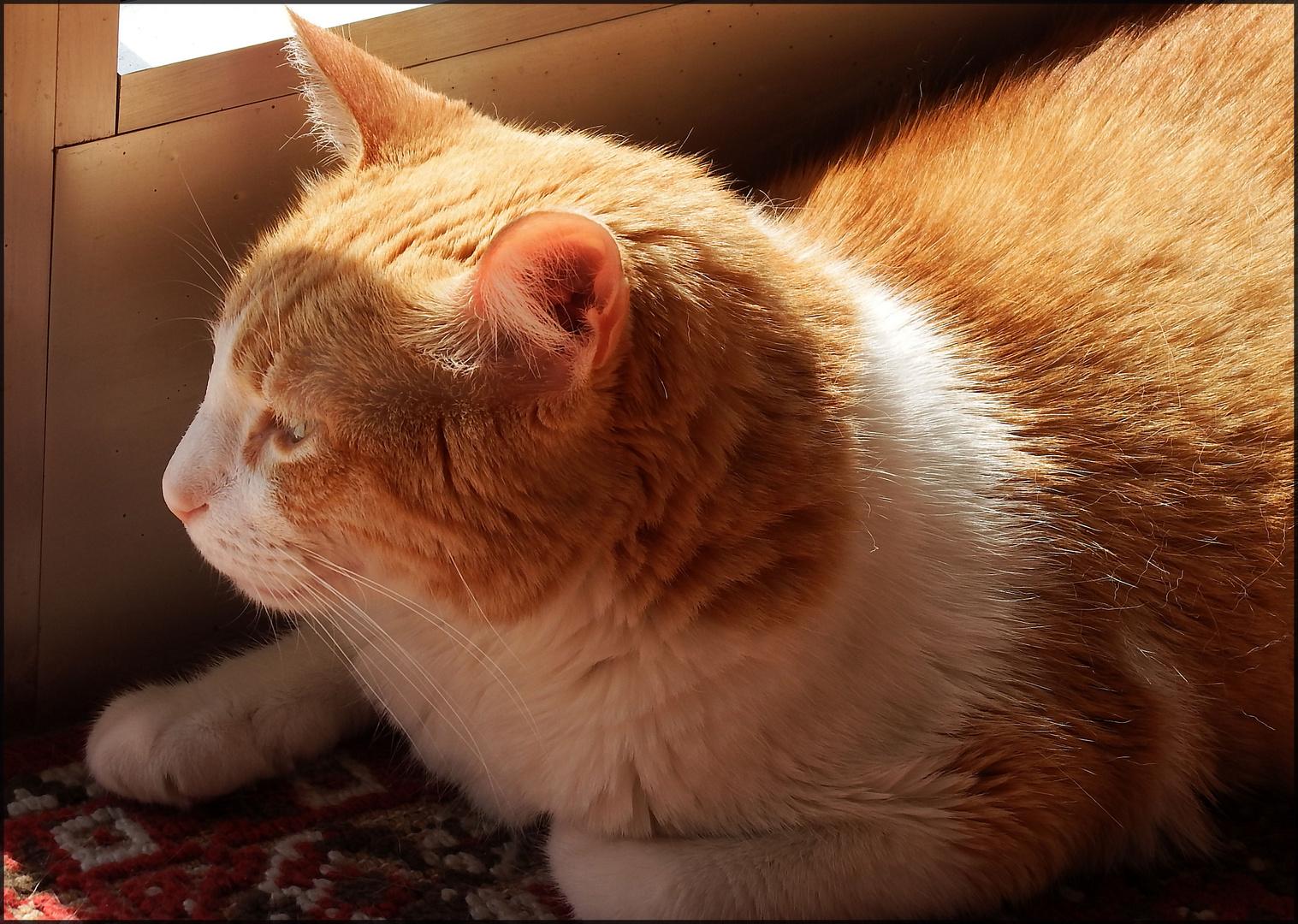 Mio Socrates al sole