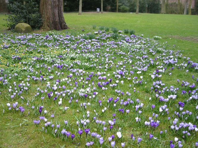 Mir blüht der Frühling in Jever