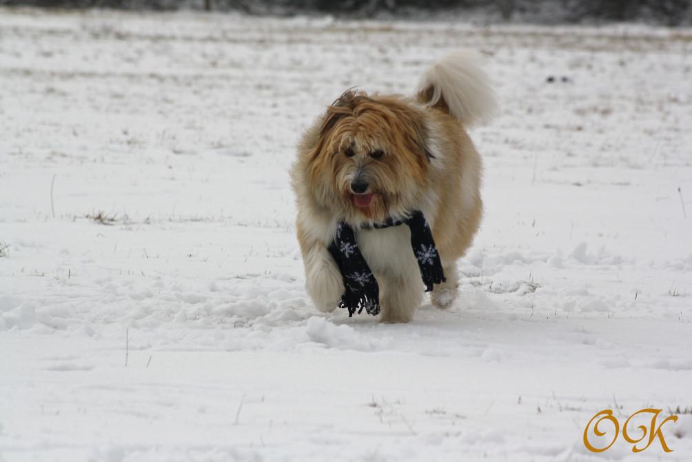 Mir Ist So Kalt Foto Bild Tiere Haustiere Hunde Bilder Auf