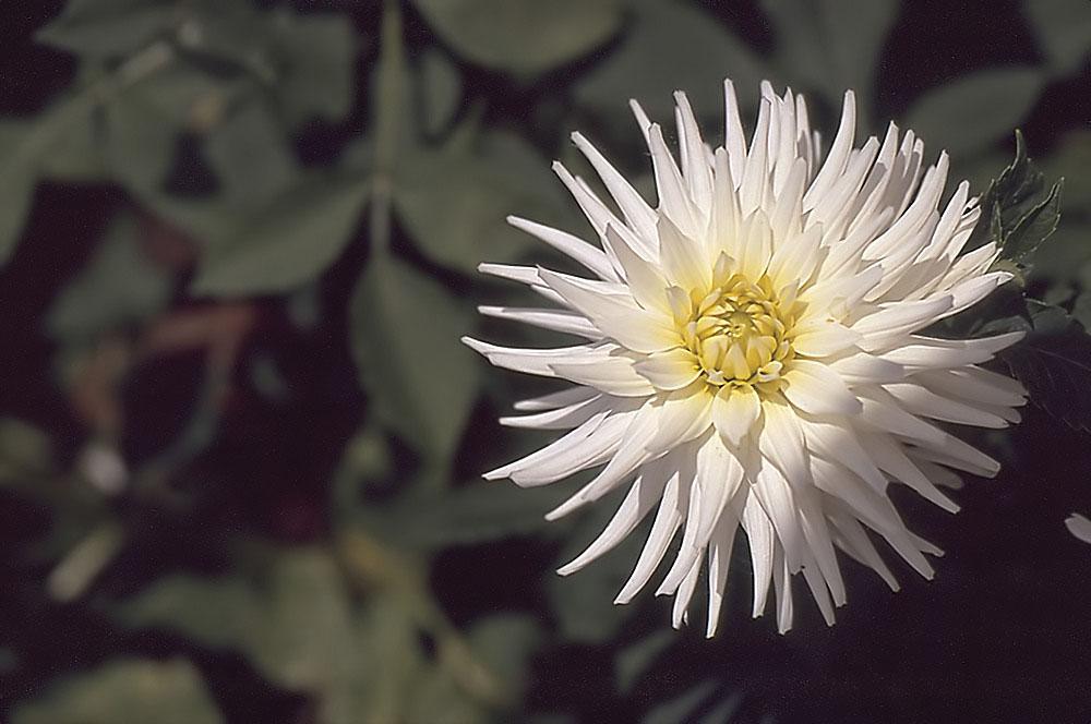 Mir unbekannte Blume
