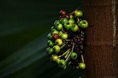 Mir unbekannte Früchte?