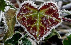 Mir wird nachts ganz kalt ums Herz, .....