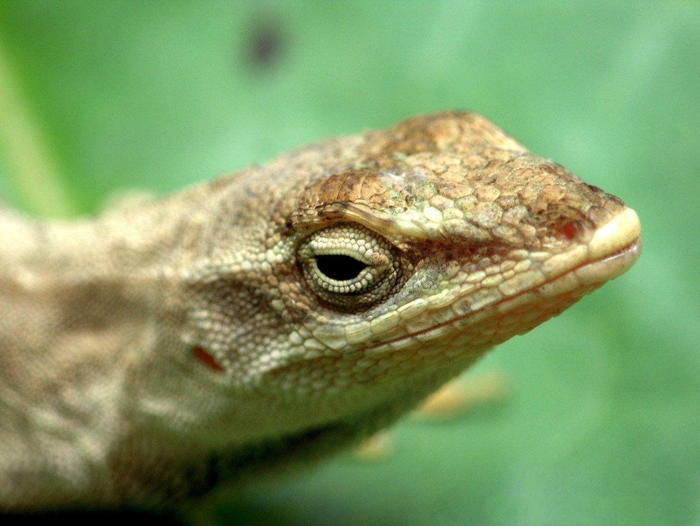 mirada de reptil