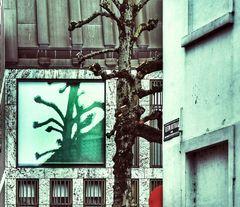 Miroir d'arbre
