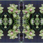 Mirror-Spielerei mit einer Orchidee