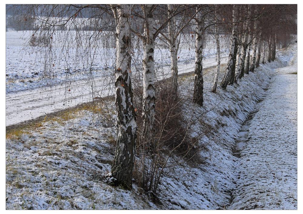 Mis abedules, los que ya conocéis, si está nevando (Meine Birken im Schnee)