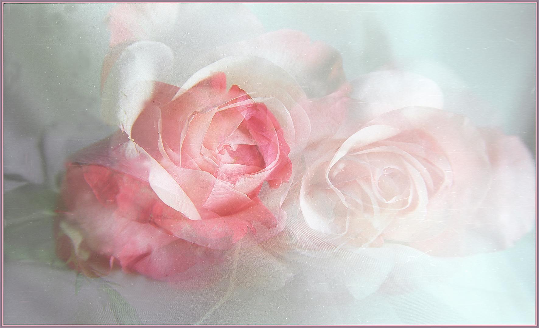 Mis rosas  en  recuerdos.