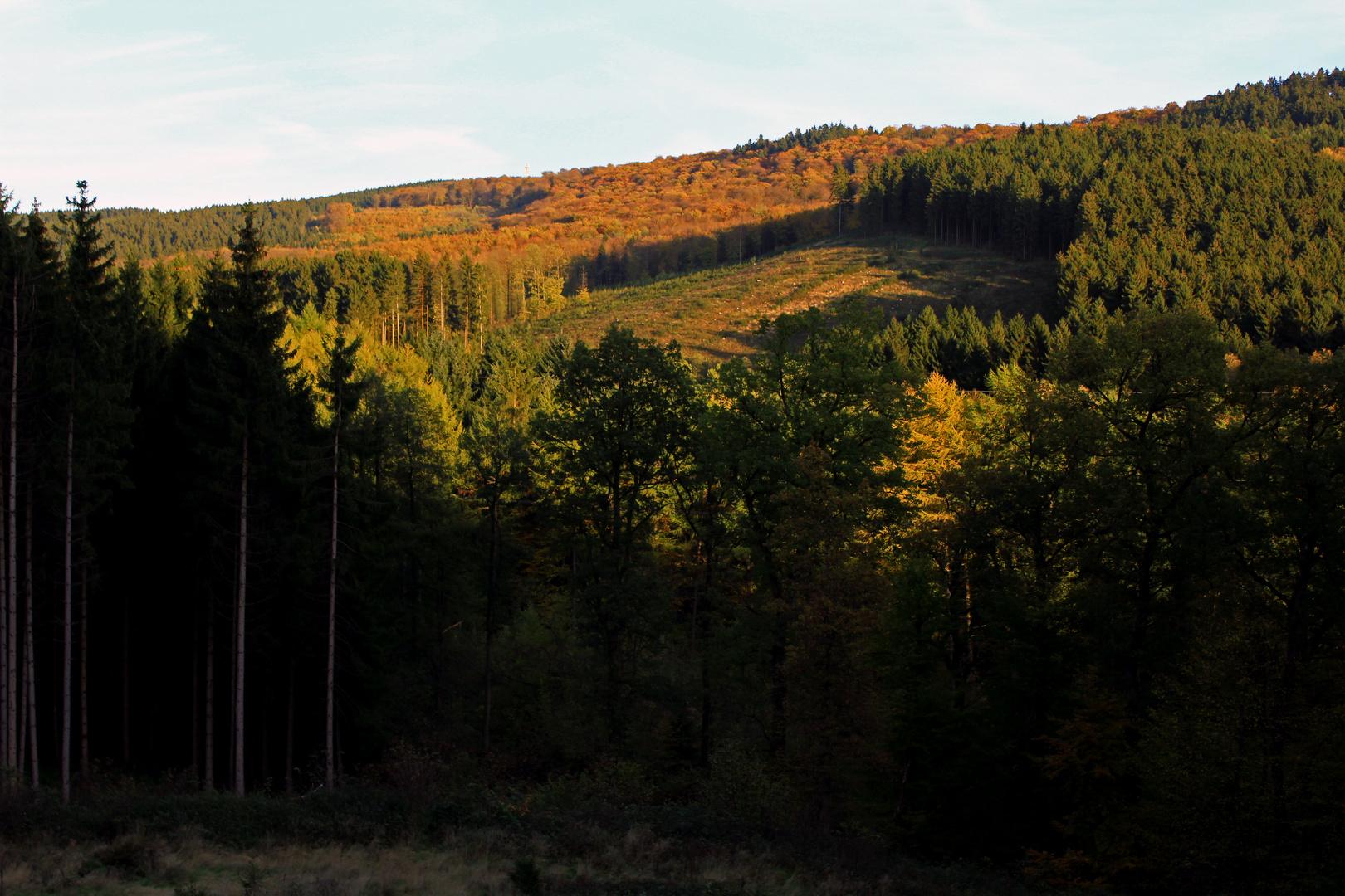 Mischwald in der Abendsonne (2)
