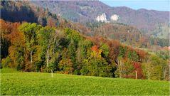 Mischwald in Herbstfarben