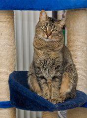 Miss Cat 2007