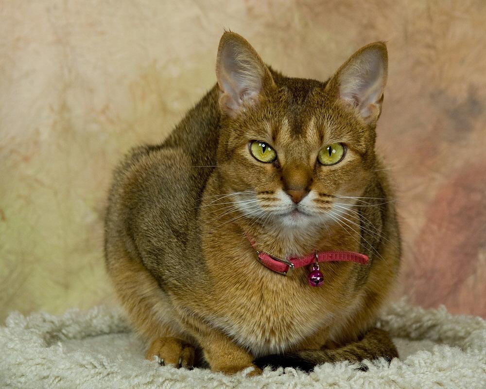 Miss Neffie portrait