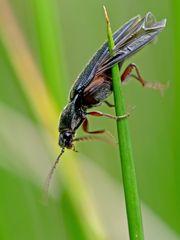 Mißgeschick eines Käfer's