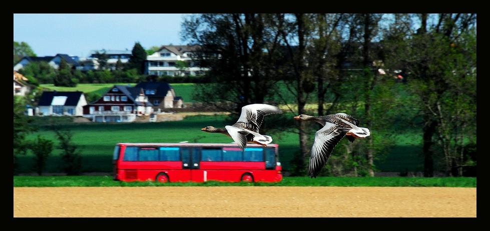 Mist ! Bus verpaßt !!!