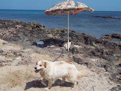 Mist! Ich muss wohl wieder den Strand bewachen!