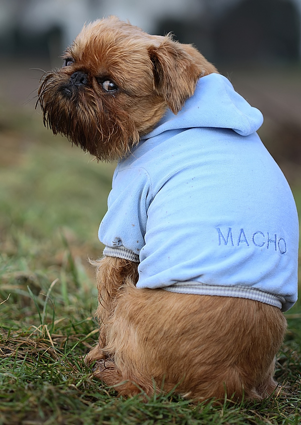 Mister Macho ;)))