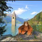 Mister Monk am Reschensee