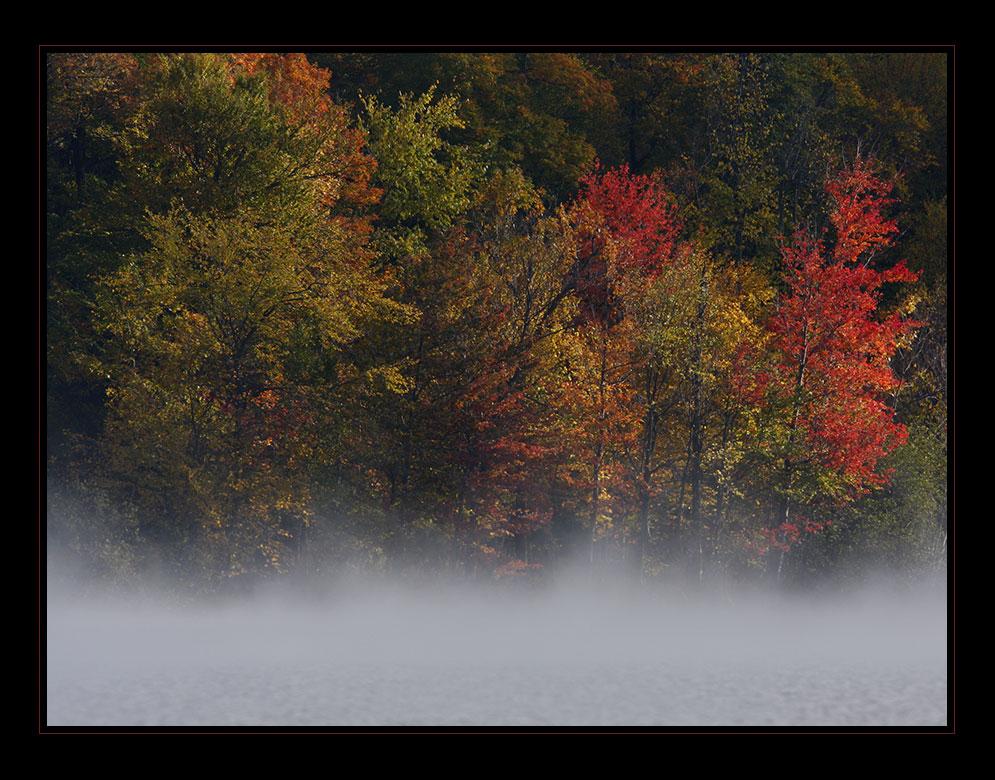 Misty autumn ...