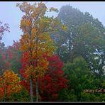Misty Fall Morning.