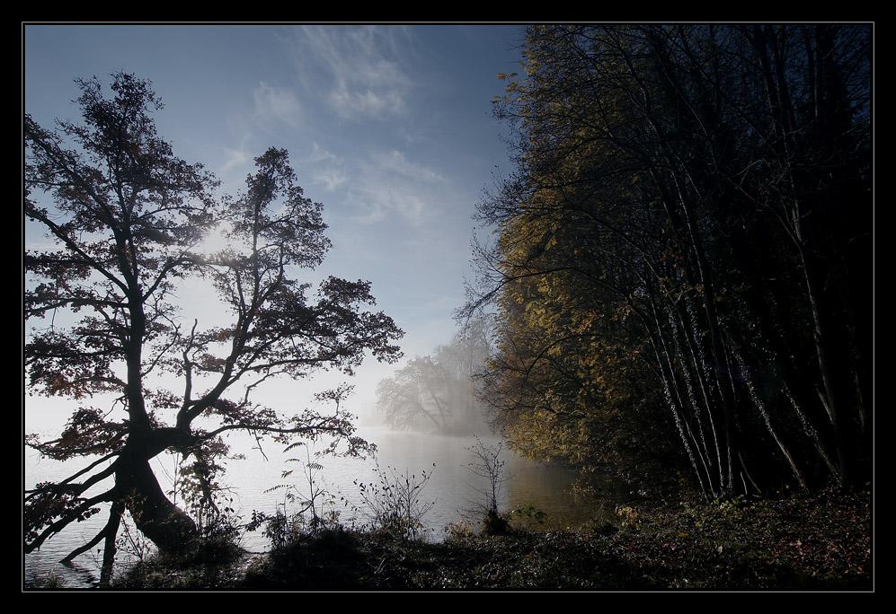 Misty Morning [3]