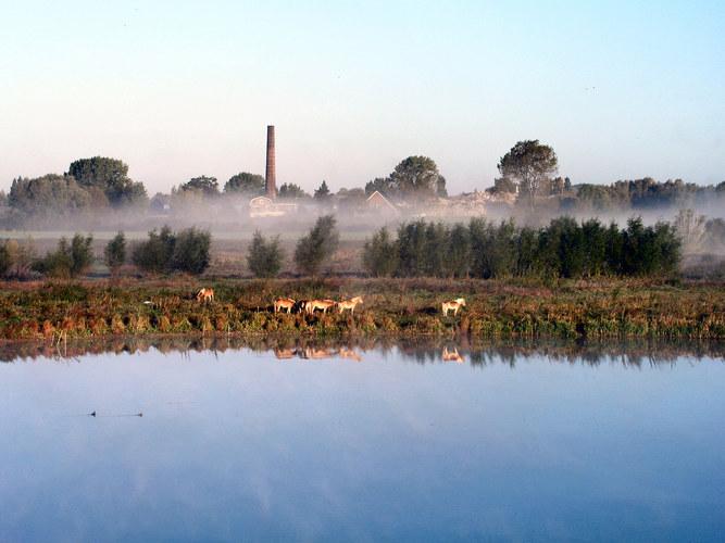 ~ Misty Morning ~