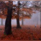 Misty morning ..