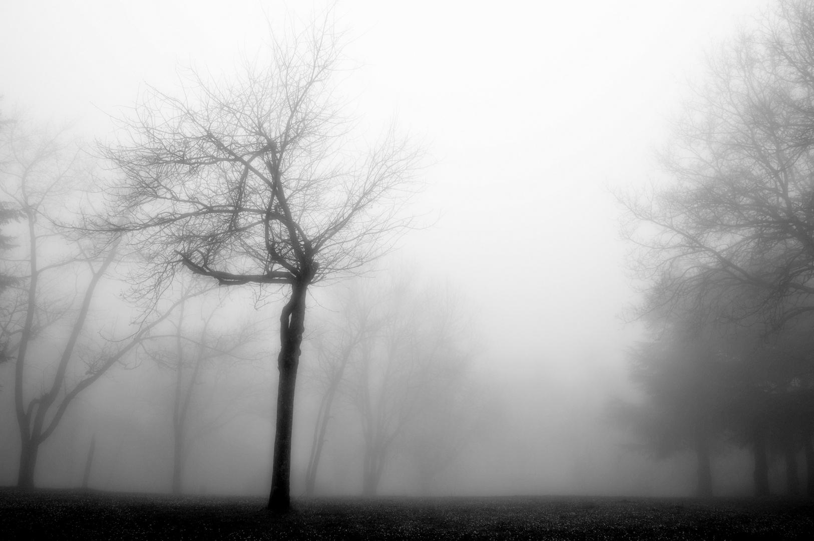 misty spring bn