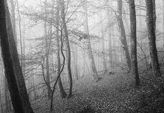 mit 90 mm Objektiv im Wald