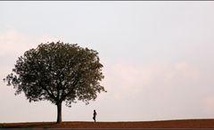 Mit Bäumen kann man wie mit Brüdern reden...