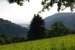 Mit Blick auf die Rheinebene