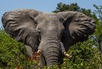 Mit dem Gruß des Elefanten...