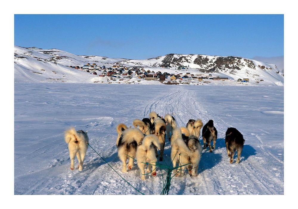 Mit dem Hundeschlitten nach Ittoqqortoormiit