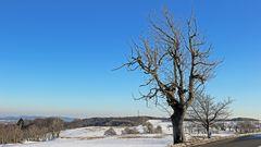 Mit dem Lieblingsbaum heute im Winter schnell noch ein Winterbild herausgesucht...