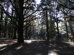 Mit den Hobbits im Düsterwald