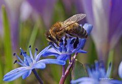 Mit der Sonne kamen am Samstag auch die Bienen