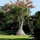 Mit diesem Baum melde ich mich nach längerer Zeit wieder ...
