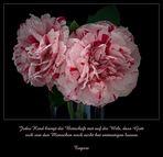 Mit diesen herrlich duftenden  Rosen