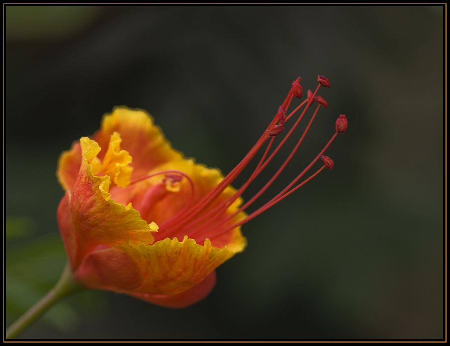 Mit dieser Blüte...