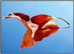 Mit einem Blatt den Herbst widerspiegeln