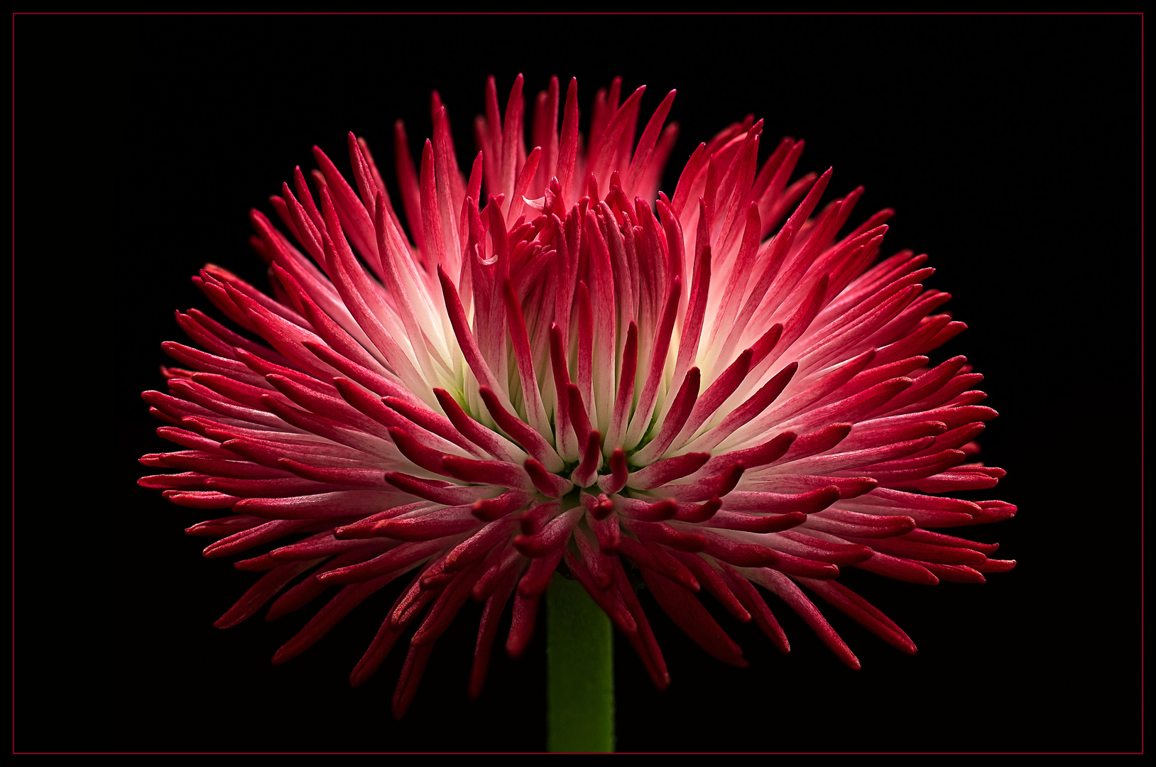 Mit einem Blumen-Feuerwerk beginne ich das Fotojahr 2020