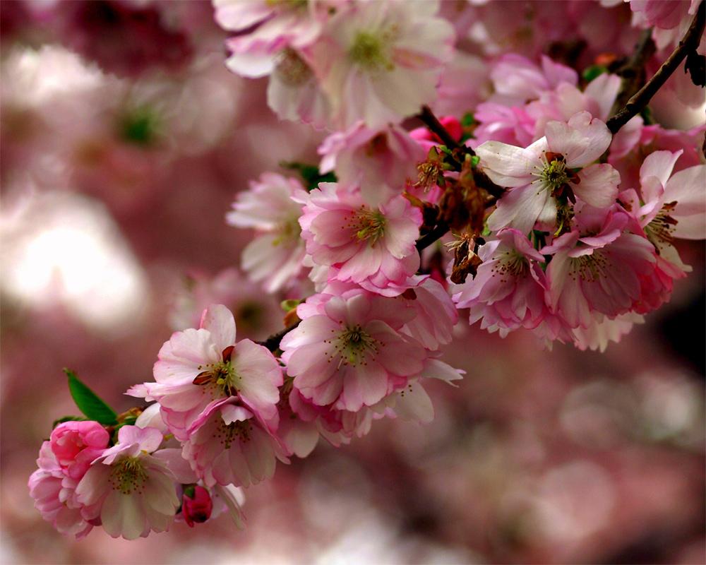 Mit einem Frühlingsgruss